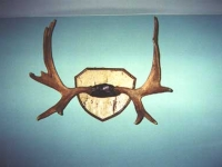 antlers-6x9